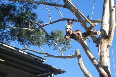Hazardous Tree Removal - High Point Tree Servic