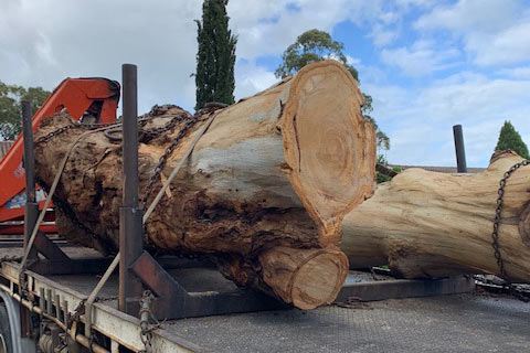 tree-removal-high-point-tree-service
